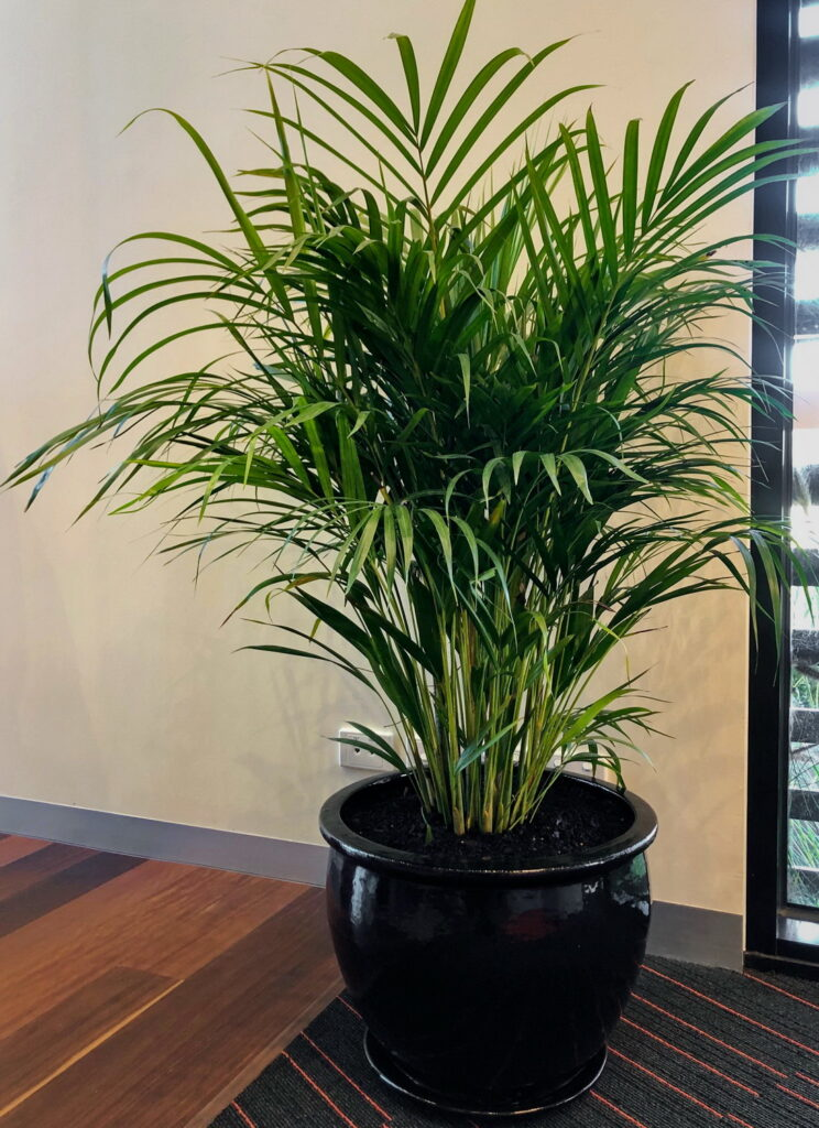 An indoor plant supplied by Prince Excavations, the ideal addition  to enhance your office space.
